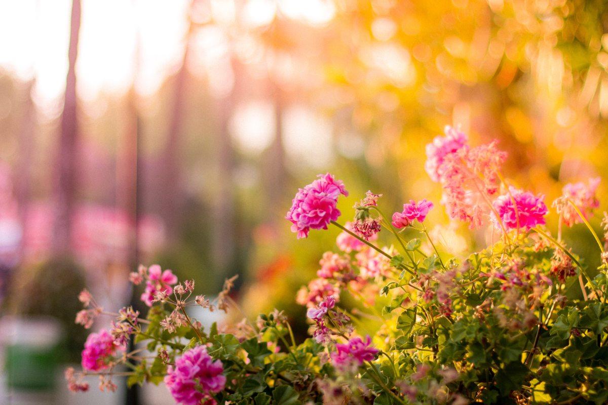 Endometriosis in the Garden