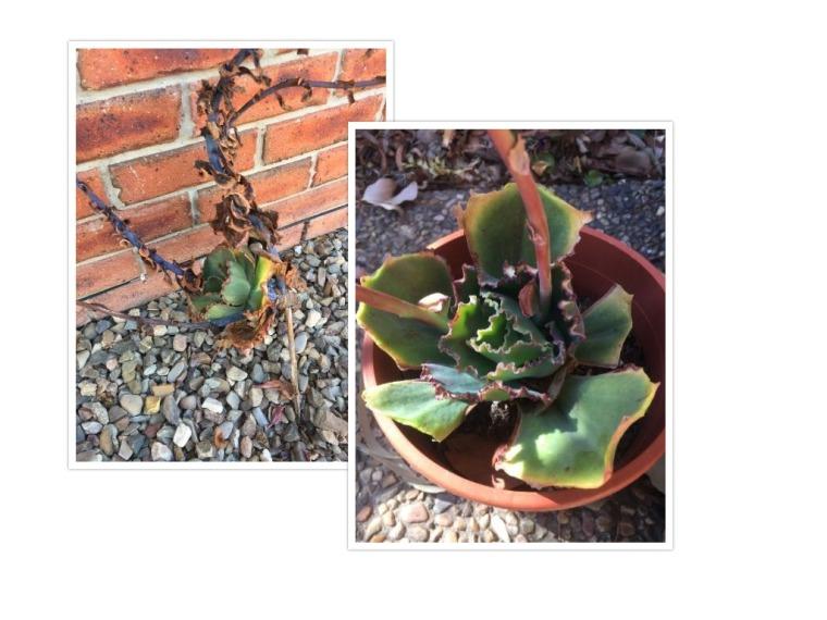 collageplants.jpg